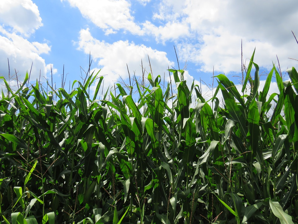Midwest study finds erosion control problems