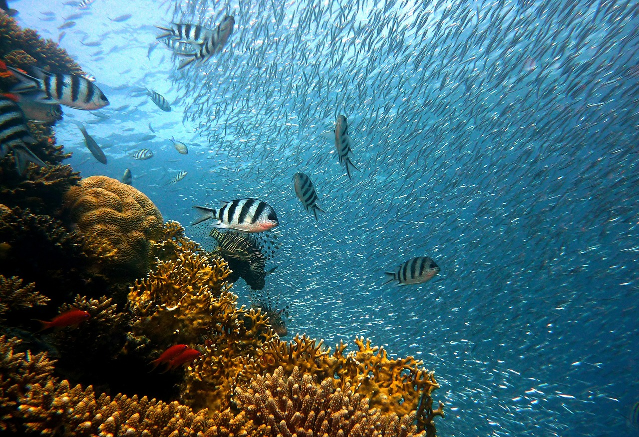 Study finds groundwater pollution had led to coral reef decline in recent years