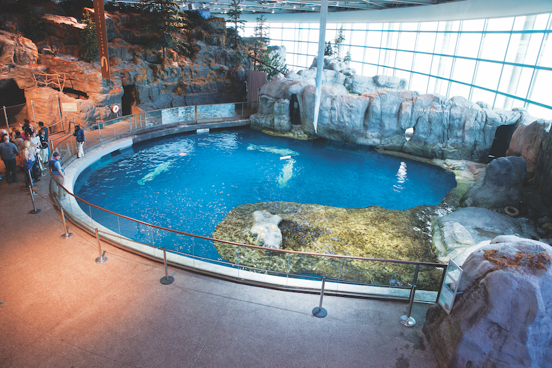 Chicago aquarium reduced its water footprint by nearly 53% over 10 year