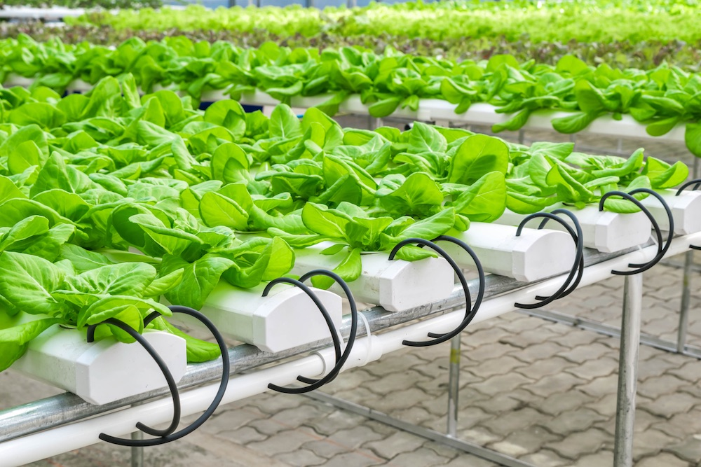 Plant cultivation uses water reuse and green water management strategy