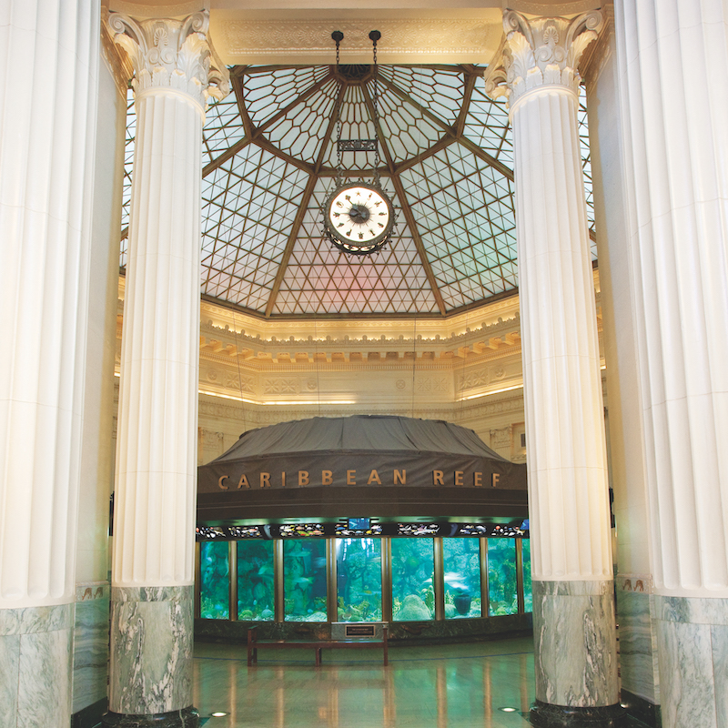 Linking the saltwater habitats at Chicago's Shedd Aquarium resulted in an annual reduction of 2.5 million gal of water.