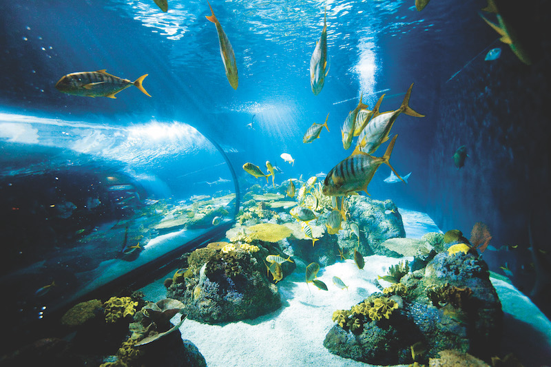 The Shedd linked saltwater habitats from the Caribbean Reef and Wild Reef exhibits to the Oceanarium