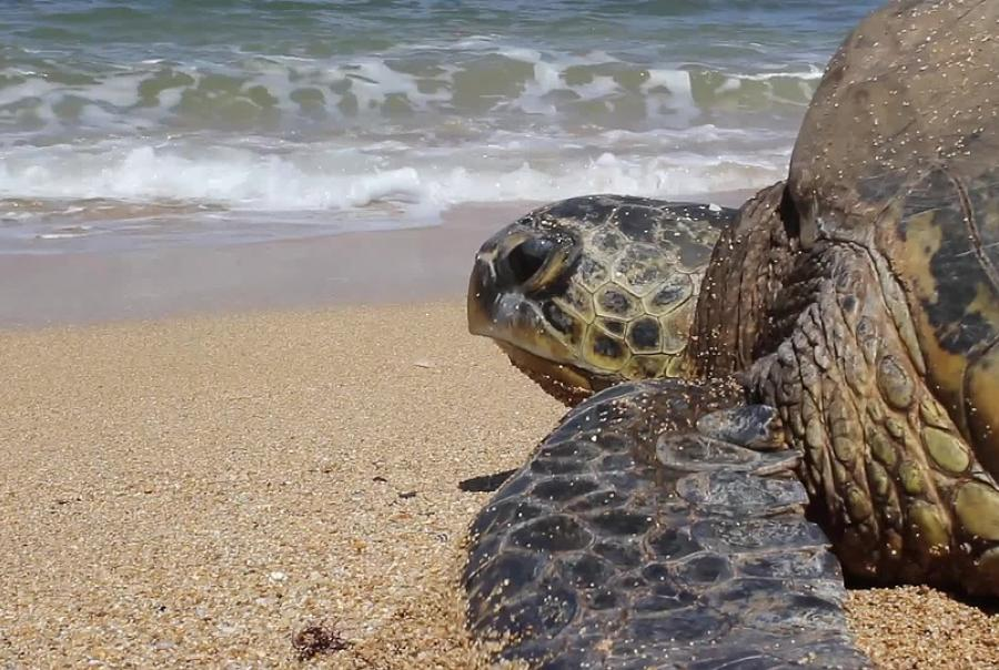 EPA funds projects in Northern Mariana Islands