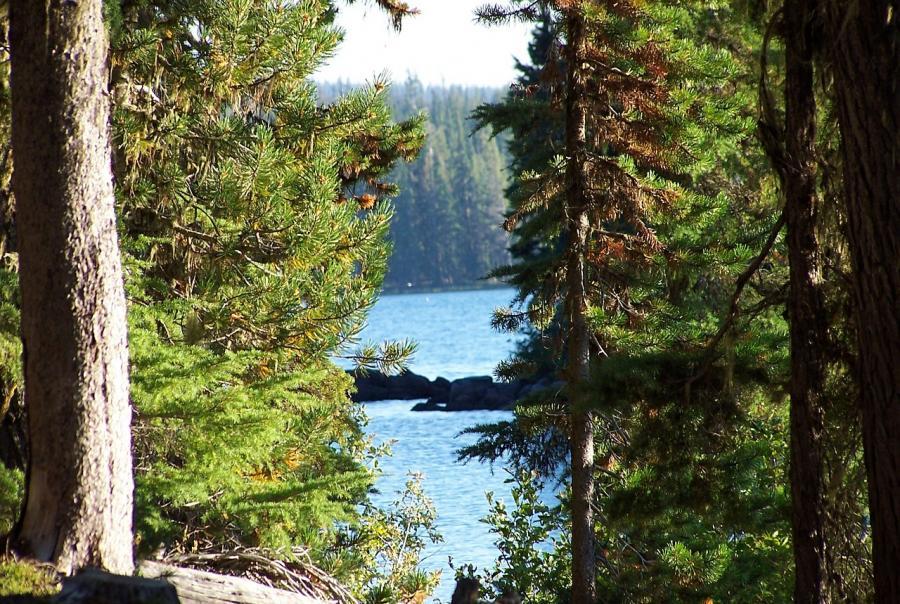 Oregon drinking water advisory lifted following toxic algae blooms