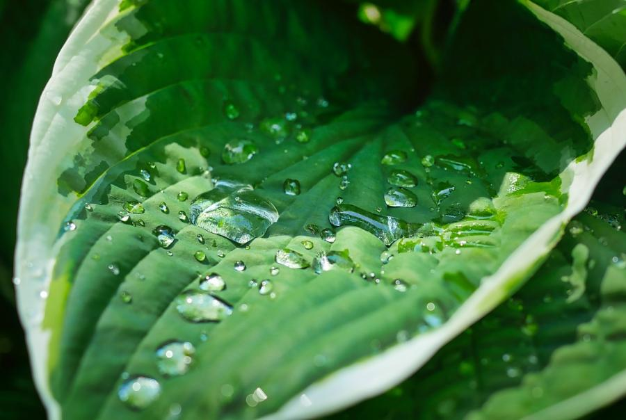 Scientists develop filtration system with plant seed and sand