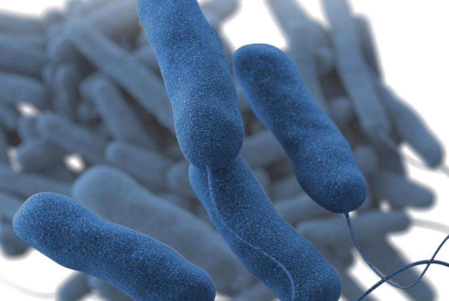 Legionnaires' disease requires monitoring and maintenance of water systems