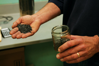 The Rise of Reactivated Carbon