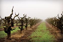 Lodi Rule winegrowing