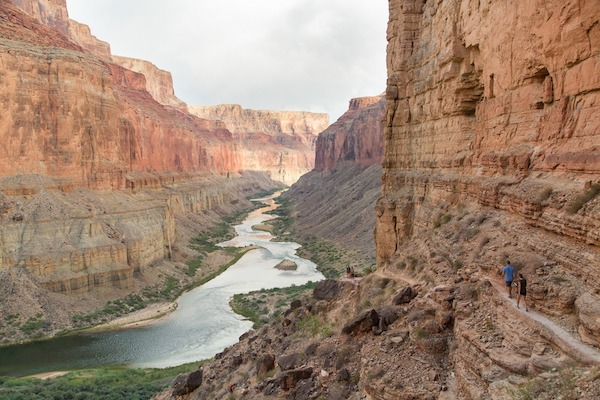 Scientists who monitor restoration in the Colorado River Delta report that a shallow water table is essential to the survival of riparian vegetation