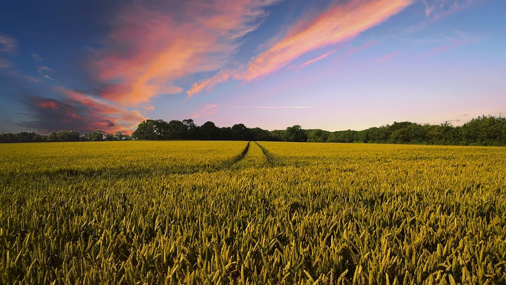 South Carolina may impose new groundwater limits for agriculture industry