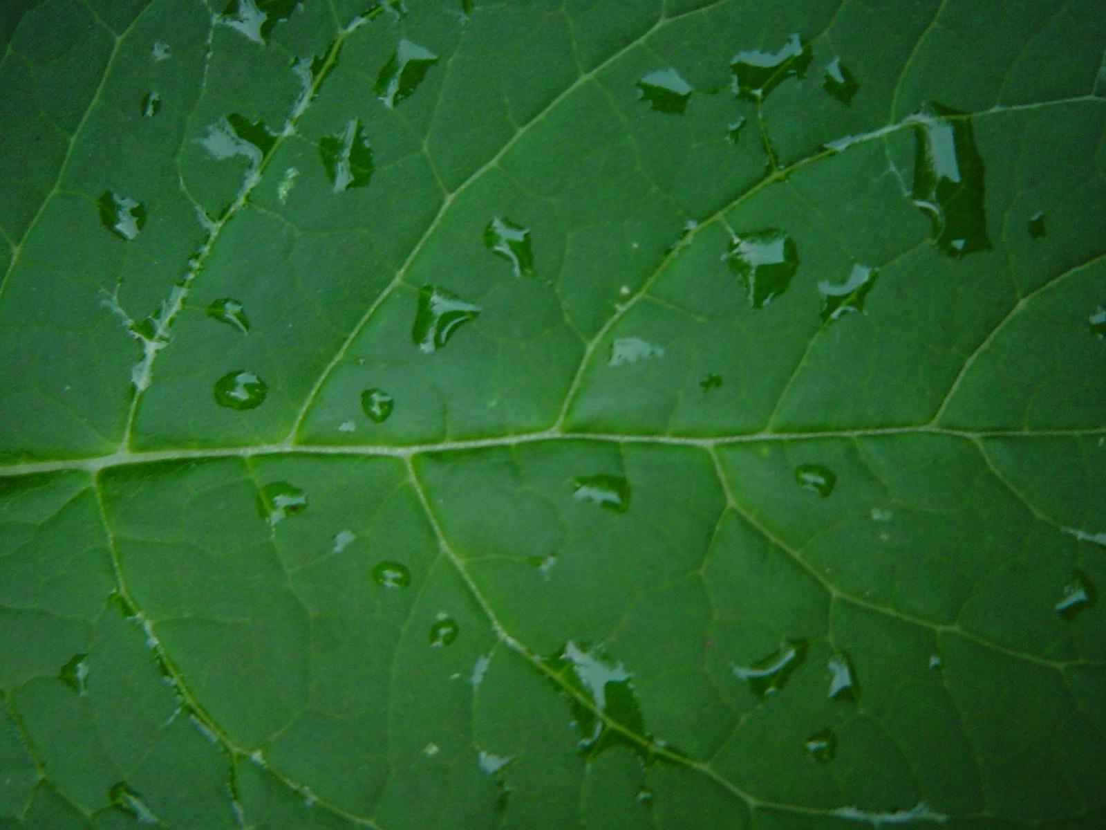 biohitech global, entsorga