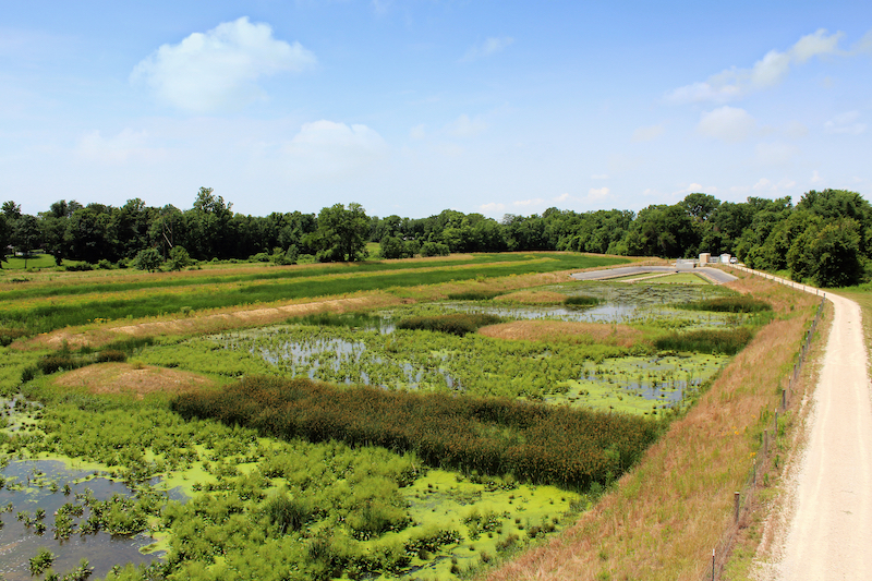 In some cases, constructed wetlands using green infrastructure are effective resources for storm water runoff. These can benefit the local community with a visually appealing treatment and runoff control system that also mitigates residential flooding.