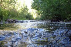 vegetation, levee, erosion control
