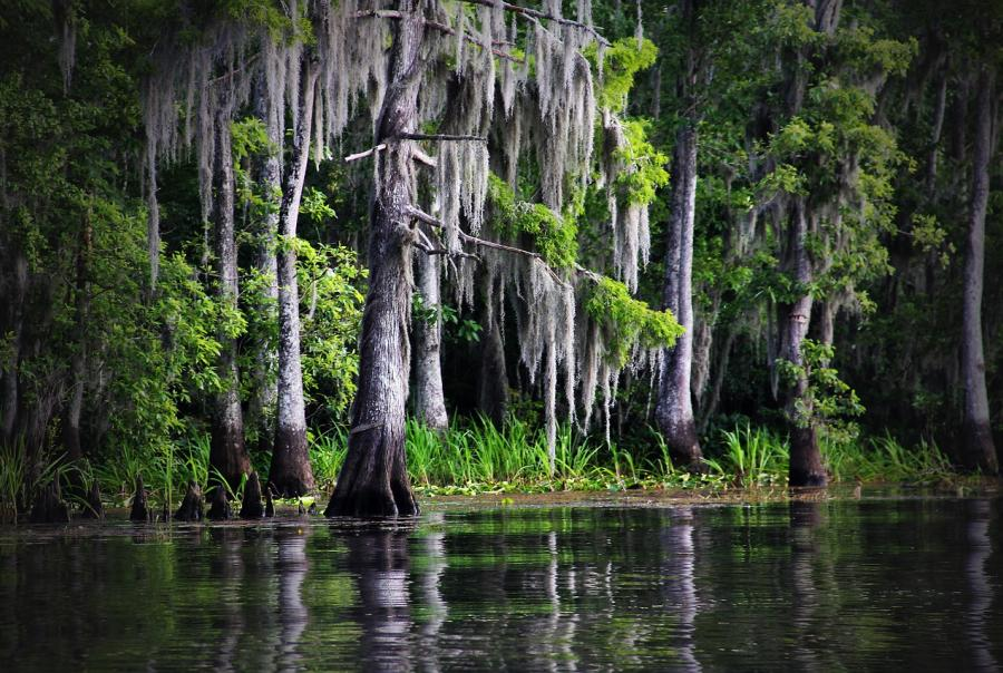 Two Louisiana water systems contaminated with brain-eating amoeba