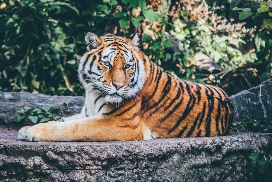 Michigan State University installs anaerobic digester at Detroit Zoo