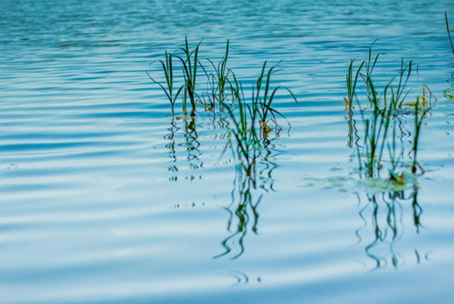 water fleas live in slow-moving water such as lagoons